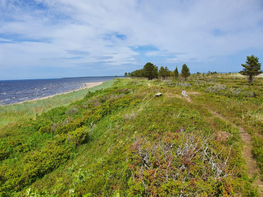 Sandy beach, grass and a little forest next to the Bothnian Bay